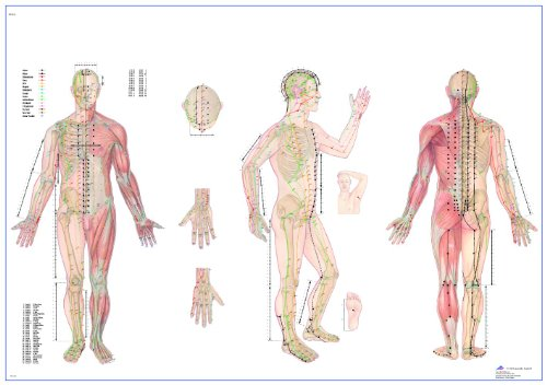 3B Scientific Human Anatomy - Body Acupuncture Chart 98 x 68 cm, Laminated Version from 3B Scientific