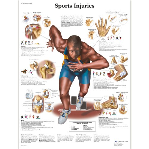 3B Scientific Human Anatomy - Sports Injuries Chart, Paper Version from 3B Scientific