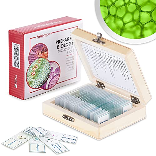 AmScope PS25W 25 Glass Prepared Microscope Slides with Wooden Box from AmScope