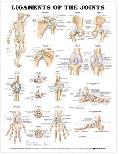 Ligaments of the Joints from Anatomical Chart