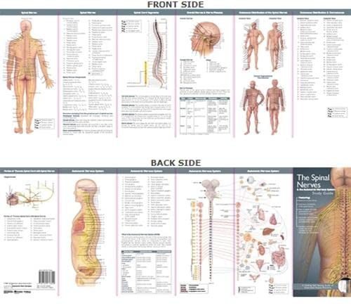 Spinal Nerves and the Autonomic Nervous System: Study Guide (Anatomical Chart Company's Illustrated Pocket Anatomy) from Anatomical Chart