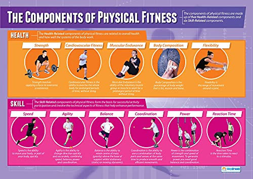Components of Physical Fitness | PE Posters | Gloss Paper measuring 850mm x 594mm (A1) | Physical Education Charts for the Classroom | Education Charts by Daydream Education from Daydream Education