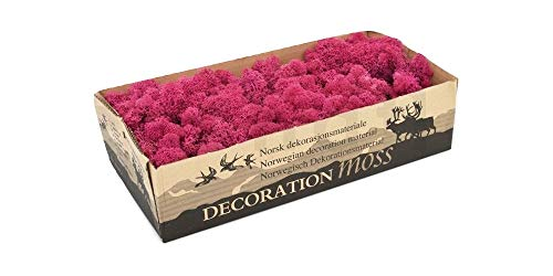 Moss - Norwegian Reindeer - Natural Preserved Dried - 20 Colours - Choose Weight (Hot Pink - Moss, 500 Grams) from Diamante Crafts