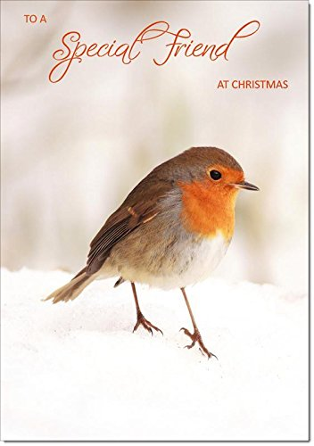 Doodlecards Special Friend Christmas Card Robin in Snow - Medium Size from Doodlecards