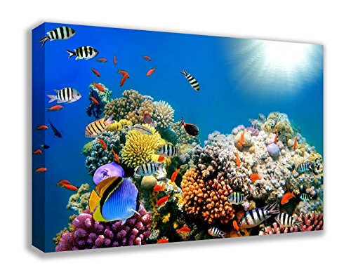 "CORAL REEF TROPICAL FISH UNDER THE SEA CANVAS WALL ART (44X26"") from Dynamo Printing Ltd"