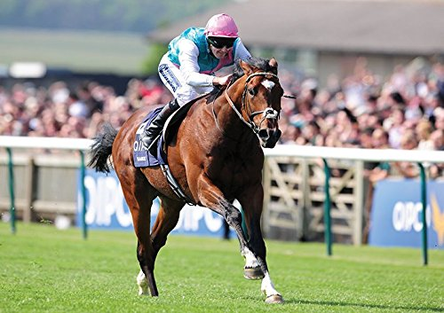 FRANKEL Racehorse Poster (A2 (594 X 420MM)) from Dynamo Printing Ltd