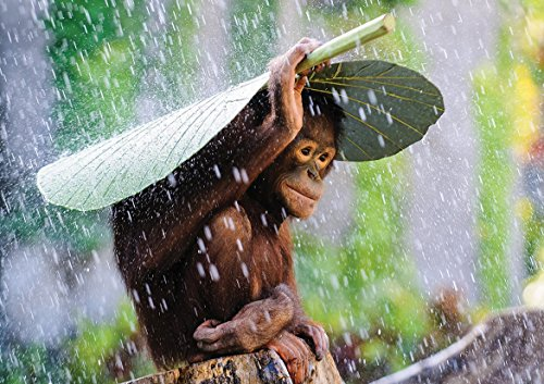 Monkey Baby RAIN Poster (A2-594x420MM) from Dynamo Printing Ltd