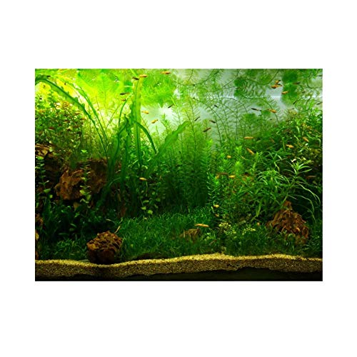 Aquarium Fish Tank Background Poster Pvc Adhesive Decor Paper Green Water Grass Aquatic Style Like Real(61X30Cm) from Fdit