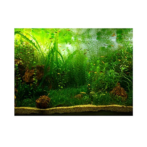 Aquarium Fish Tank Background Poster PVC Adhesive Decor Paper Green Water Grass Aquatic Style Like Real(76 * 30cm) from Fdit
