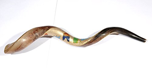 Yom Kippur Authentic High Quality Pure Polished Shofar (79cm) from HOLYLAND