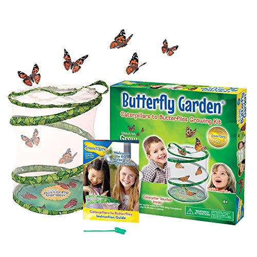 Insect Lore Butterfly Garden (Packaging May Vary) from Insect Lore