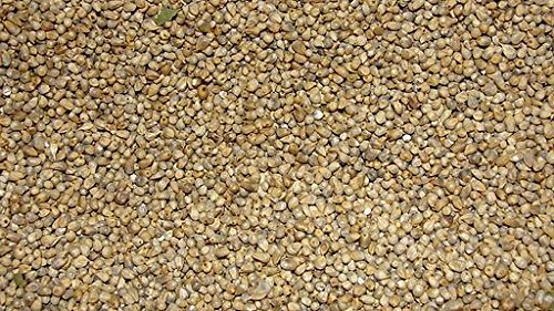Jalpur - Whole Millet Seeds (Bajri Whole) - 200g from Jalpur