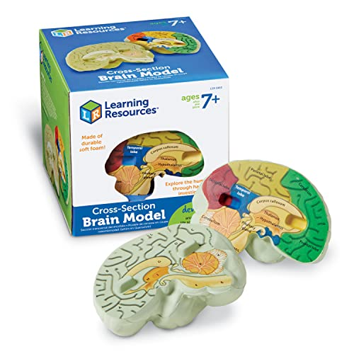 Learning Resources Soft Foam Cross-Section Brain Model from Learning Resources (UK Direct Account)