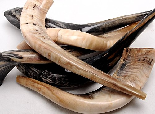 Authentic & High Quality Polished Shofar ((Size 60cm-70cm)) from HOLYLAND