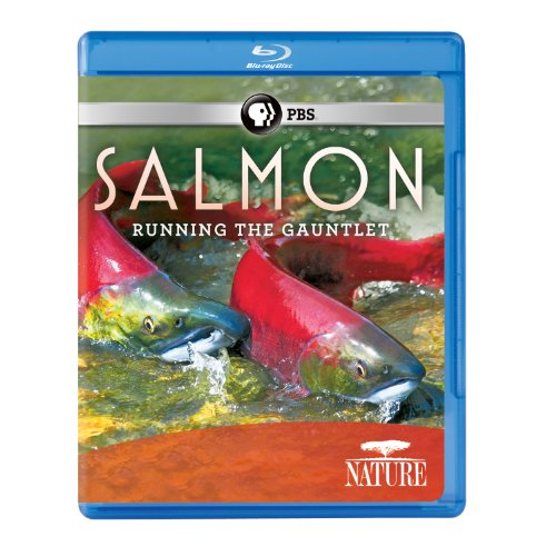 Nature: Salmon [Blu-ray] [US Import] from PBS