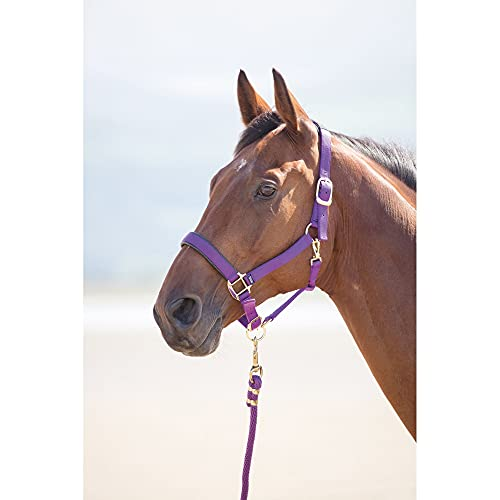 Shires Topaz Nylon Headcollars (387) Purple Extra Full from Shires