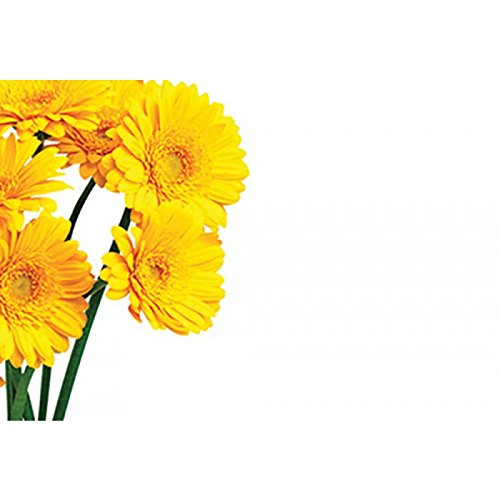 Plain Floristry Message Cards Flowers and Floral Gifts (Yellow Gerberas) from Smithers Oasis