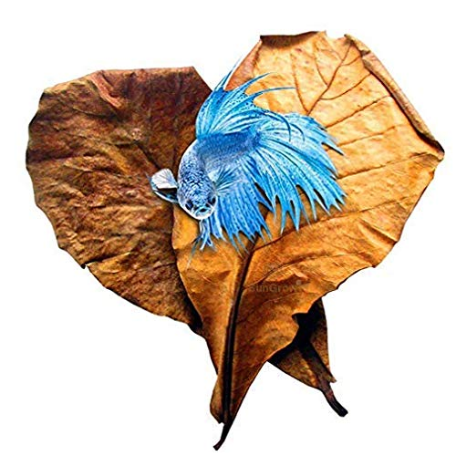 SunGrow Betta Leaves Replicate natural habitat for betta & improve well-being - Tannin improves immunity, prevents harmful bacterial growth - Easy to use, add 1 piece per water change from SunGrow