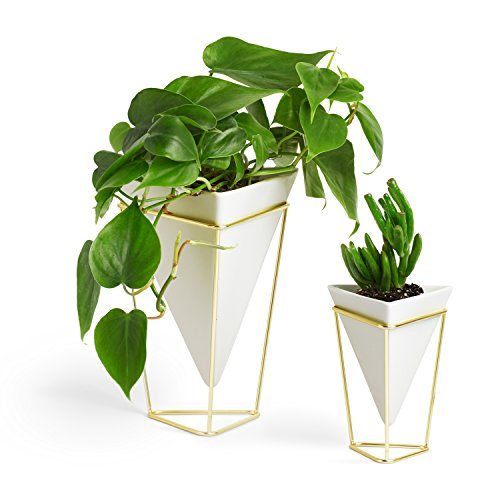 Umbra Trigg Desktop Planter Vase & Geometric Container - Great For Succulent Plants, Air Plant, Mini Cactus, Faux Plants and More, White Ceramic/Brass (Set of 2) from Umbra