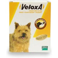 Veloxa Chewable Worm Treatment Tablets For Dogs Beef Flavoured x 2 from Veloxa