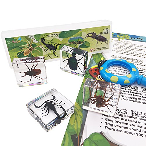 WhizKidsLab 4PCS Real Bugs Insect Arachnid Resin Specimen STEM set Magnifier Fun Fact Sheet Poster from WhizKidsLab