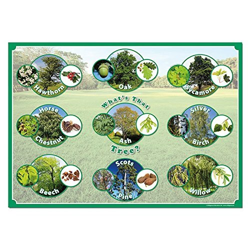 Wildgoose Education SC1106 Poster, What's that Tree from Wildgoose Education