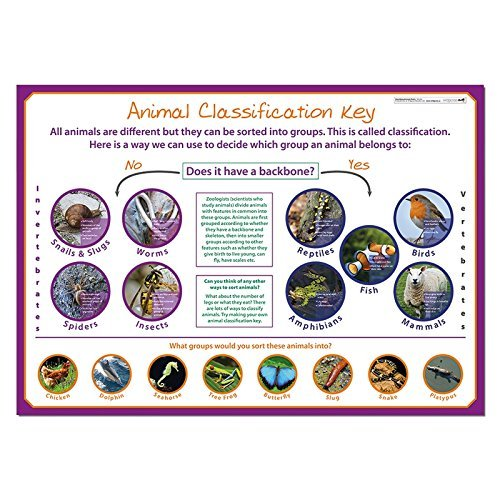 Wildgoose Education SC1114 Classifying Animals Poster from Wildgoose Education