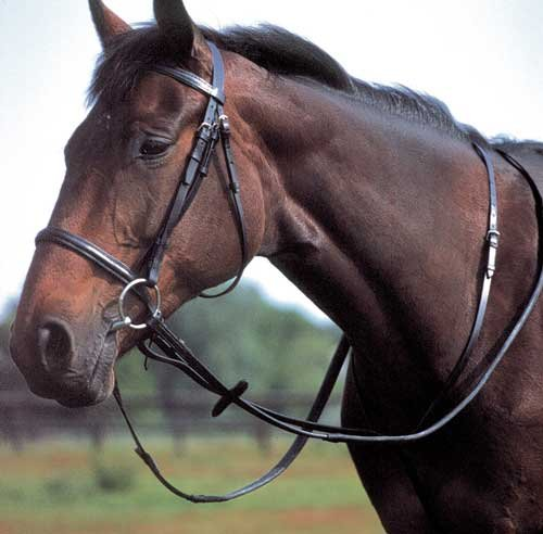 Windsor Equestrian Horse Standing Martingale  Brown  Cob from Windsor Equestrian Products