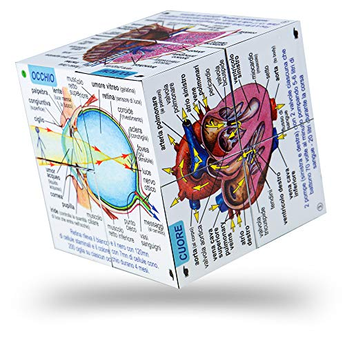 ZooBooKoo Italian Human Body Systems and Statistics Cubebook - Fold-Out Cube from ZooBooKoo